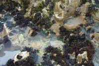 tide-pool-closeup.jpg