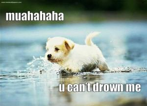lol-doggie-i-can-walks-on-water