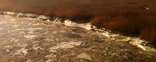 frozen salt marsh - cropped