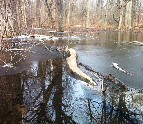 Mount Royal - Frozen Pond - Apr 2014 - A