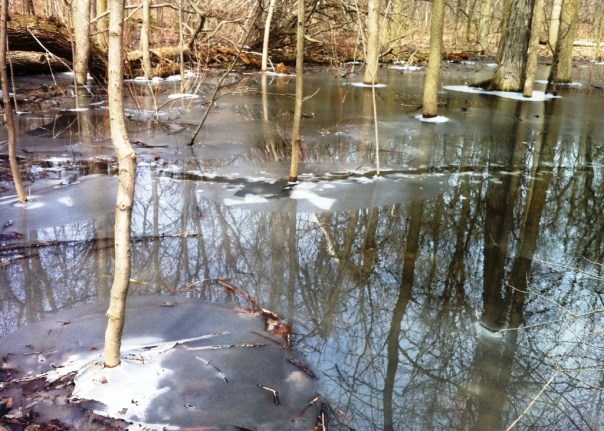Mount Royal - Frozen Pond - Apr 2014 - B
